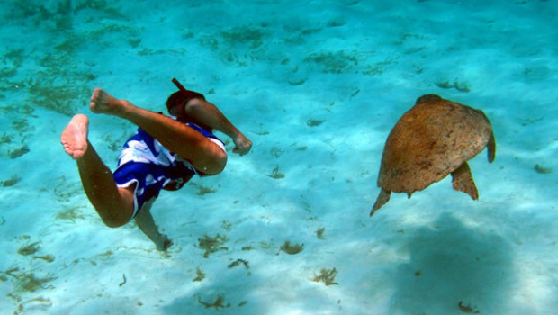 Snorkeling at Turtle Inn http://www.ecoworldly.com